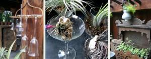 Air Plant Martini